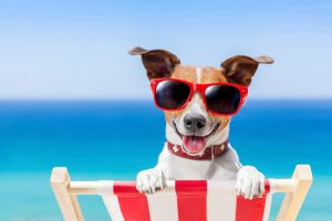 summer-vacation-dog